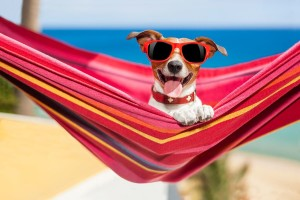 Dog relaxing on a hammock with sunglasses