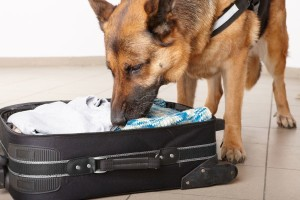 Airport canine sniffs out luggage