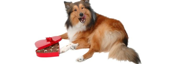 Dog with chocolates