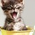 Funny kittens sitting in buckets